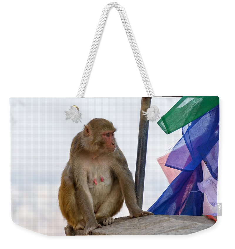 Macaque Weekender Tote Bag featuring the photograph A Female Macaque On Top Of Wall by Dutourdumonde Photography