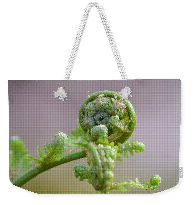 A Fiddlehead Abstract Weekender Tote Bag featuring the photograph A Fiddlehead Abstract by Maria Urso