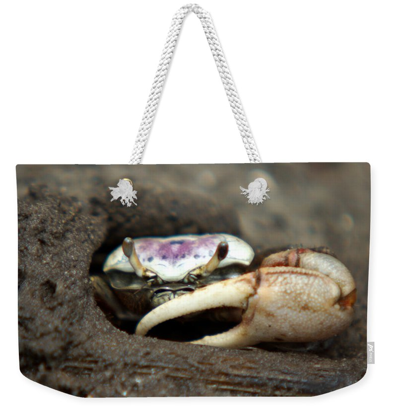 A Fiddler Crab Weekender Tote Bag featuring the photograph A Fiddler Crab Around Hilton Head Island by Kim Pate