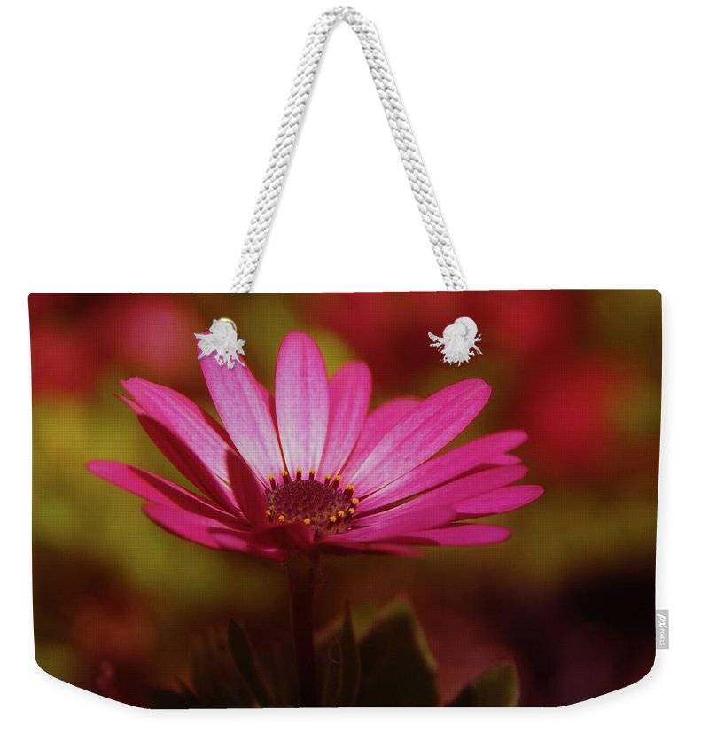 Flowers Weekender Tote Bag featuring the photograph A Flower In A Shadow by Jeff Swan