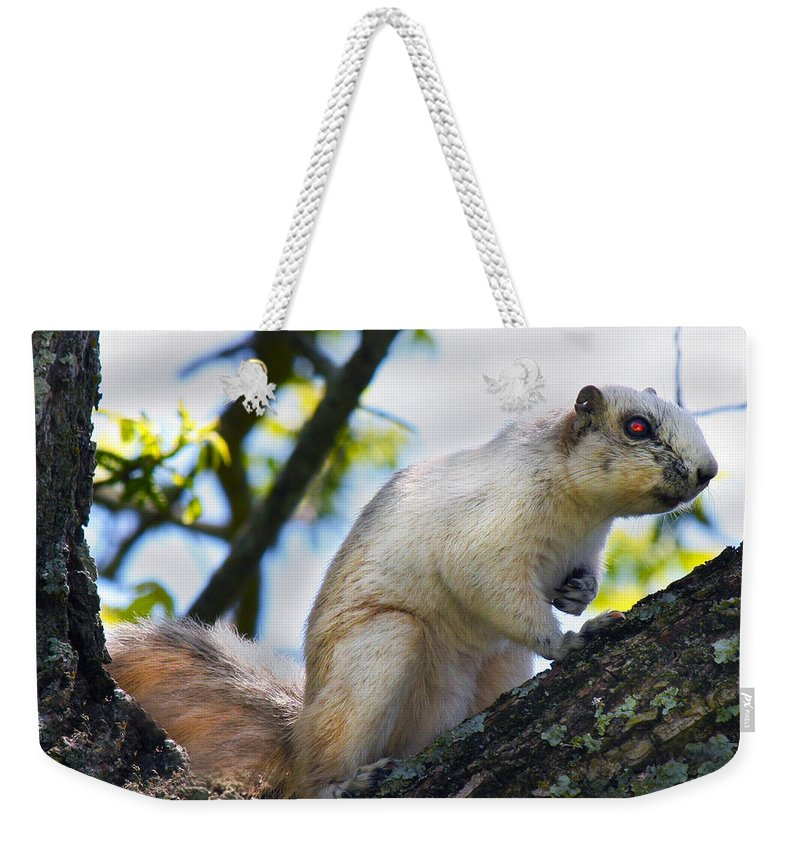 Fox Weekender Tote Bag featuring the photograph A Fox Squirrel Pauses by Betsy Knapp