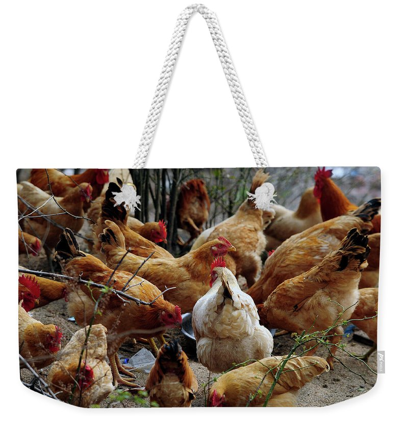 Hen Weekender Tote Bag featuring the photograph A Gang Of Chicken by Ghostmonger's