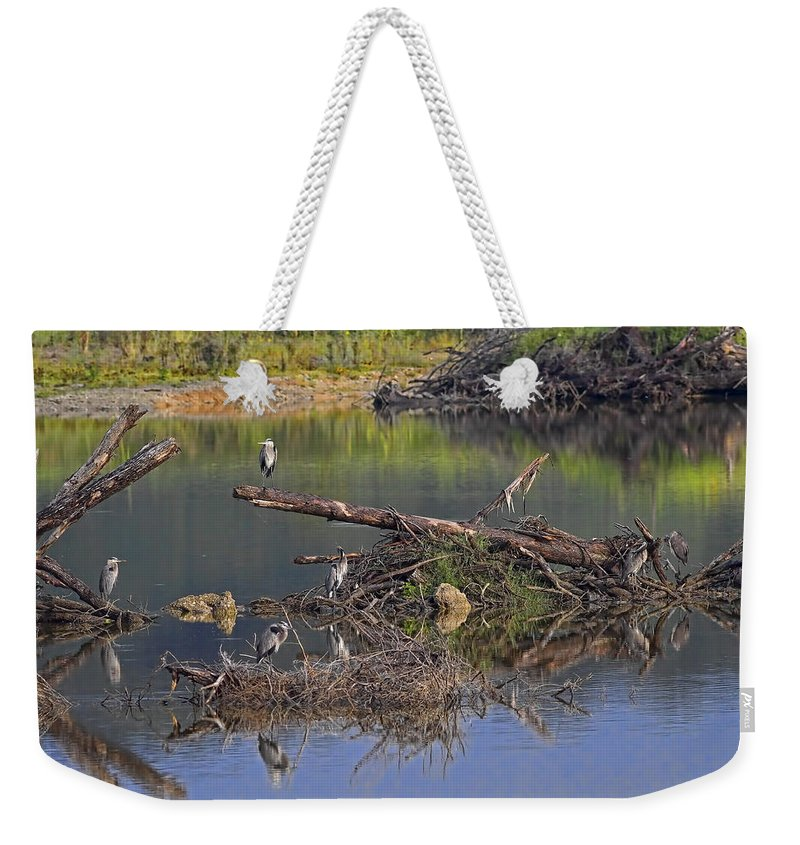 Lake Weekender Tote Bag featuring the photograph A Hedge Of Heron by Gary Holmes