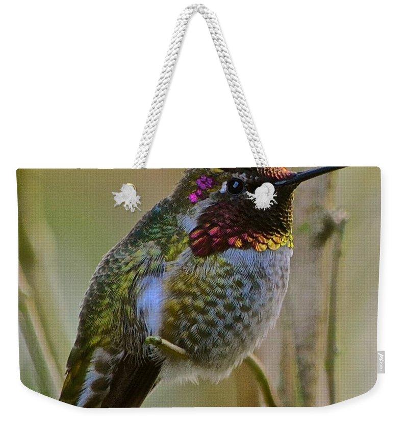 Anna's Hummingbird Weekender Tote Bag featuring the photograph A Hummingbird Rainbow by Lisa Telquist