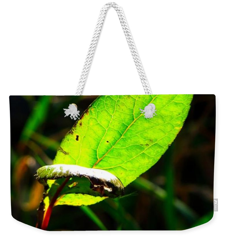 Photo Weekender Tote Bag featuring the photograph A Leaf... by Tim Fillingim