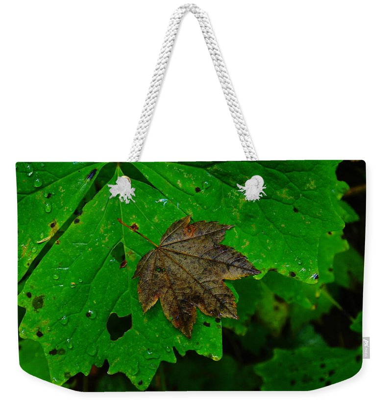 Leaves Weekender Tote Bag featuring the photograph A Leaf Upon A Leaf by Jeff Swan