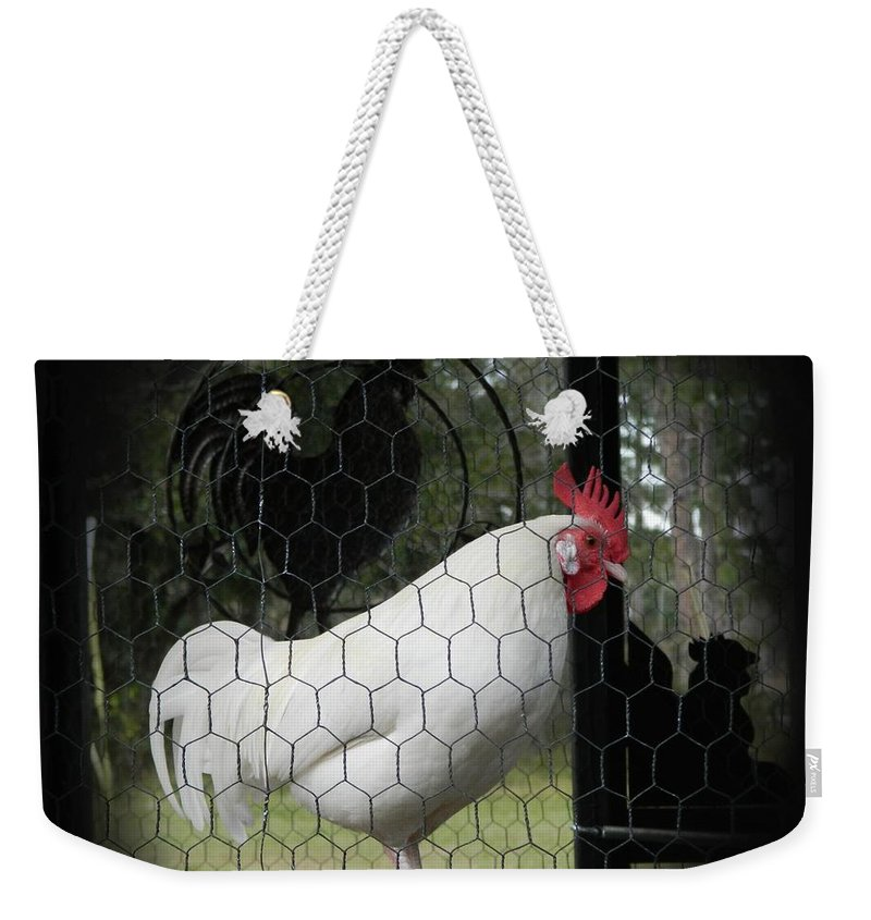 Leghorn Weekender Tote Bag featuring the photograph a Leghorn and His Shadows by George Pedro