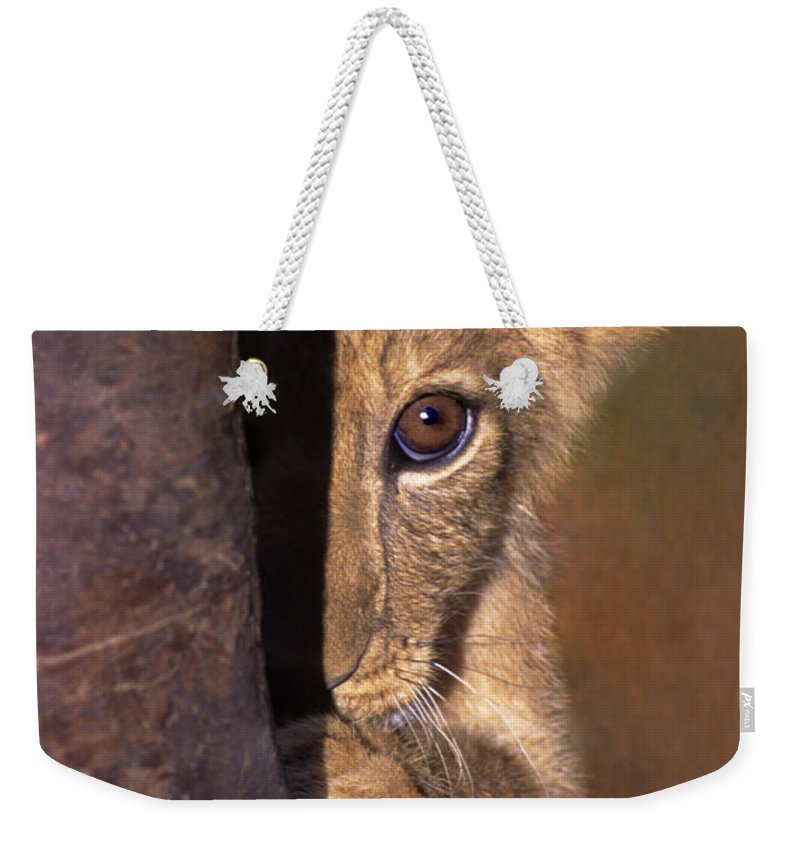 African Lion Weekender Tote Bag featuring the photograph A Lion Cub Plays Hide And Seek Wildlife Rescue by Dave Welling