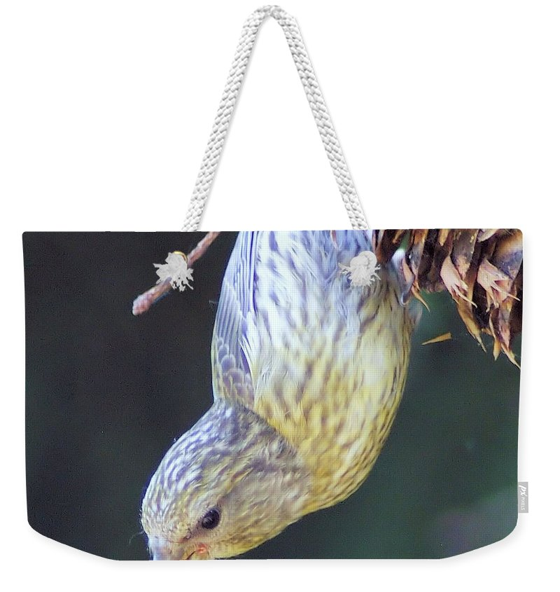 Fowl Weekender Tote Bag featuring the photograph A Little Bird Eating Pine Cone Seeds by Jeff Swan