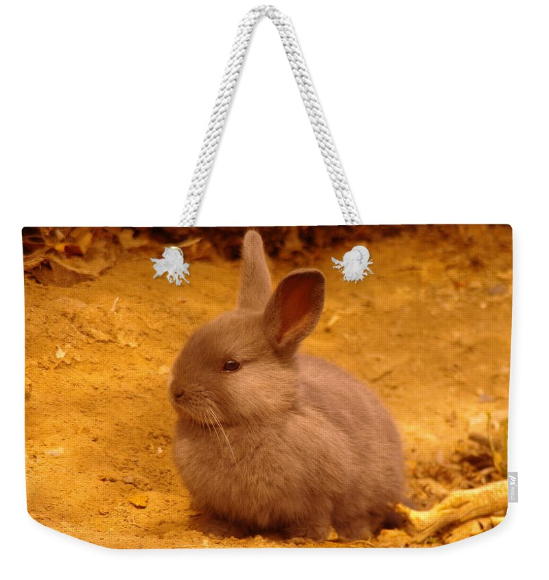 Rabbits Weekender Tote Bag featuring the photograph A Little Bunny by Jeff Swan