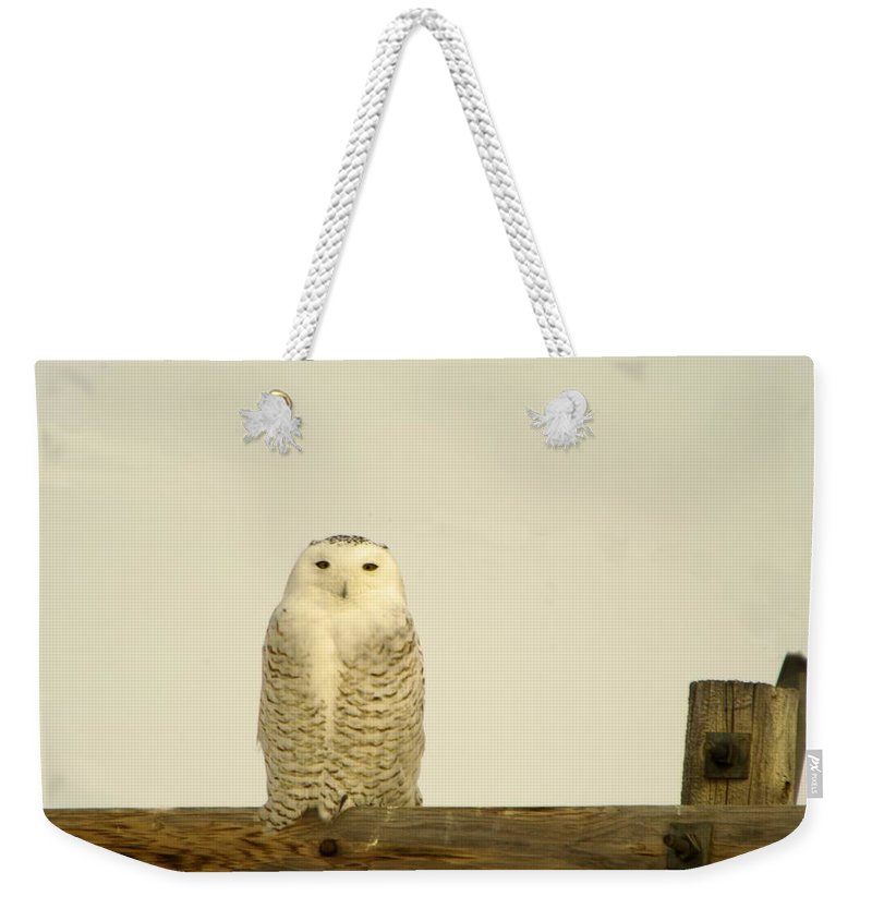 Birds Weekender Tote Bag featuring the photograph A Lone Artic Owl by Jeff Swan