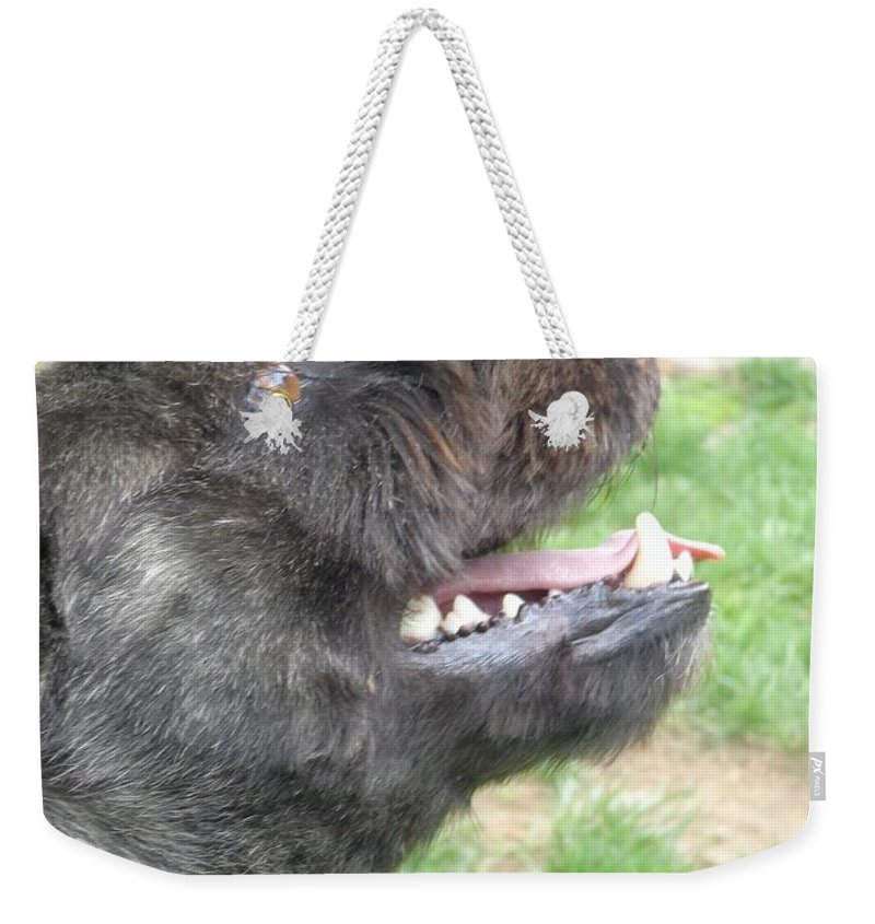 Dogs Weekender Tote Bag featuring the photograph A Loyal Friend by Jannice Walker