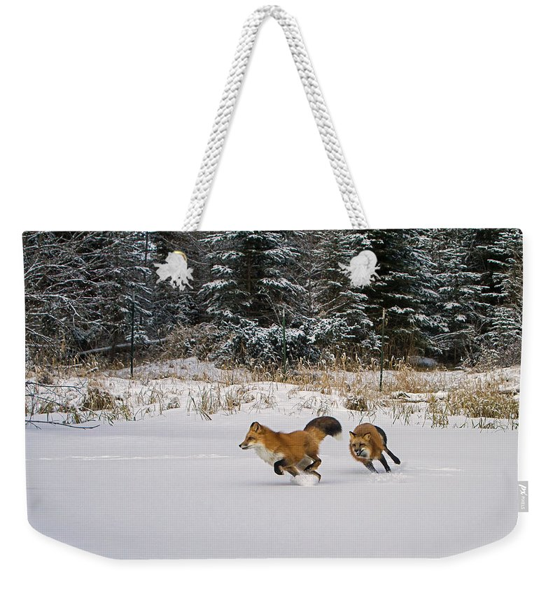 Red Fox Weekender Tote Bag featuring the photograph A Morning Run by Jack Bell