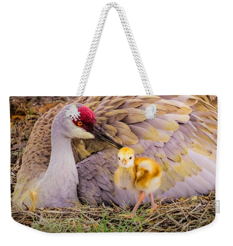 Cute Weekender Tote Bag featuring the photograph A Mother's Lovely Touch by Zina Stromberg