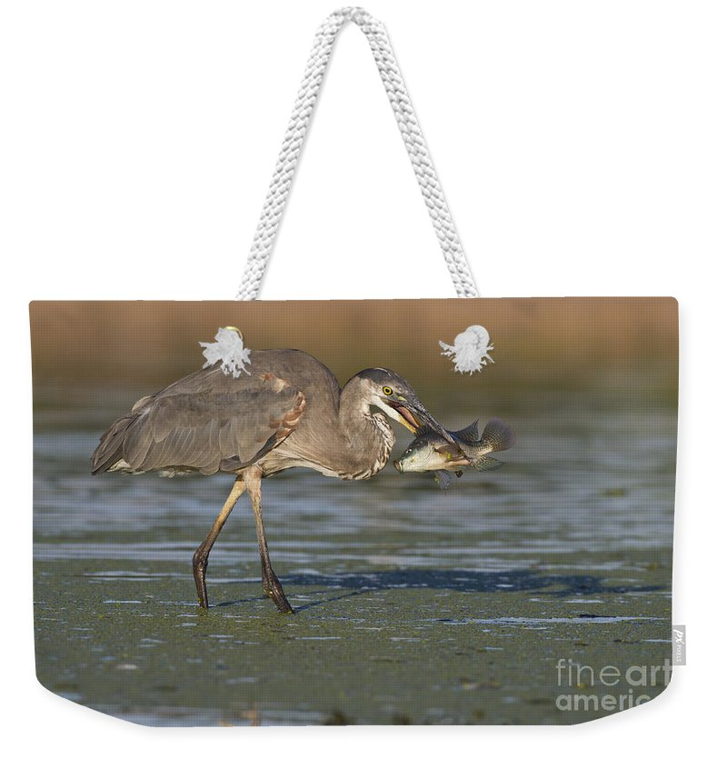 Gbh Weekender Tote Bag featuring the photograph A Mouthful by Bryan Keil