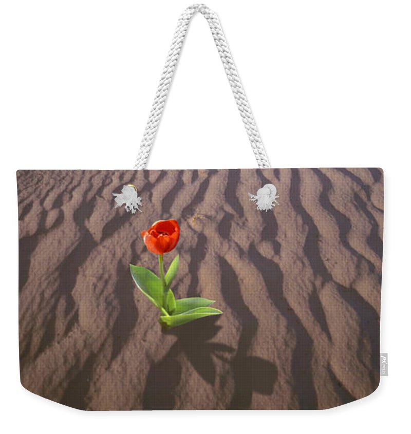 Disaster Art Weekender Tote Bag featuring the photograph A New Beginning by Mike McGlothlen
