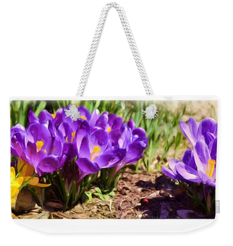 Crocus Weekender Tote Bag featuring the photograph A Painting Crocus Panoramic by Mike Nellums