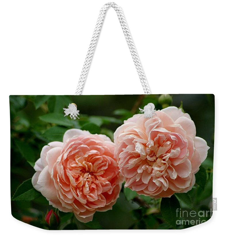 Colette Roses Weekender Tote Bag featuring the photograph A Pair Of Colette Roses by Living Color Photography Lorraine Lynch