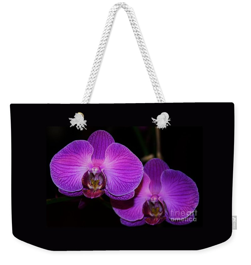 Orchid Art Floral Nature Exotic Flora Nature Purple Blossoms Bermuda Blossoms Wood Print Metal Frame Canvas Print Greeting Card Poster Print Available On Throw Pillows Mugs Duvet Covers Tote Bags Phone Cases T Shirts Pouches Weekender Tote Bags Fleece Blankets And Shower Curtains Weekender Tote Bag featuring the photograph A Pair Of Purple Orchids From Bermuda by Marcus Dagan