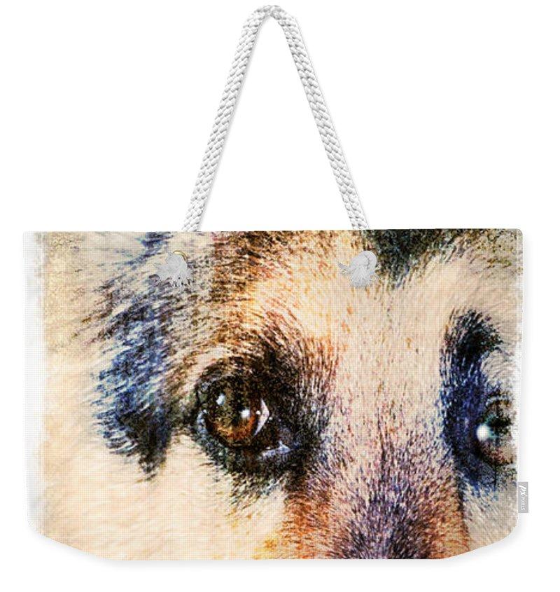 German Shepherd Weekender Tote Bag featuring the photograph A Penetrating Gaze by Eleanor Abramson
