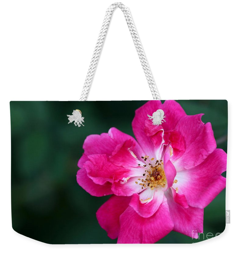 Macro Weekender Tote Bag featuring the photograph A Pretty Pink Rose by Sabrina L Ryan