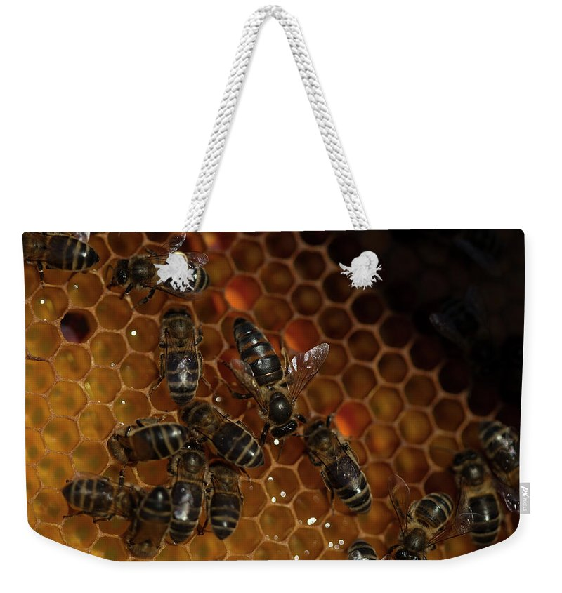 Worker Bees Weekender Tote Bag featuring the photograph A Queen Bee Walks In The Center by Chico Sanchez