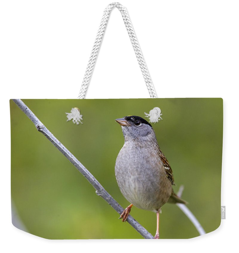 Doug Lloyd Weekender Tote Bag featuring the photograph A Real Poser by Doug Lloyd