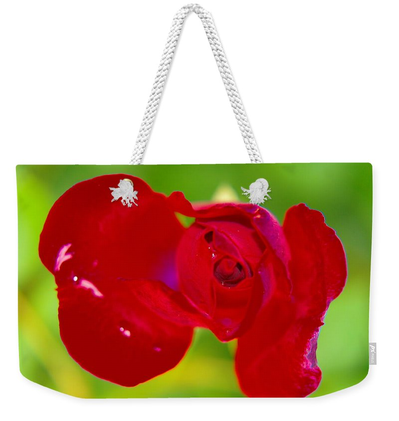 Flowers Weekender Tote Bag featuring the photograph A Red Wet Rose by Jeff Swan