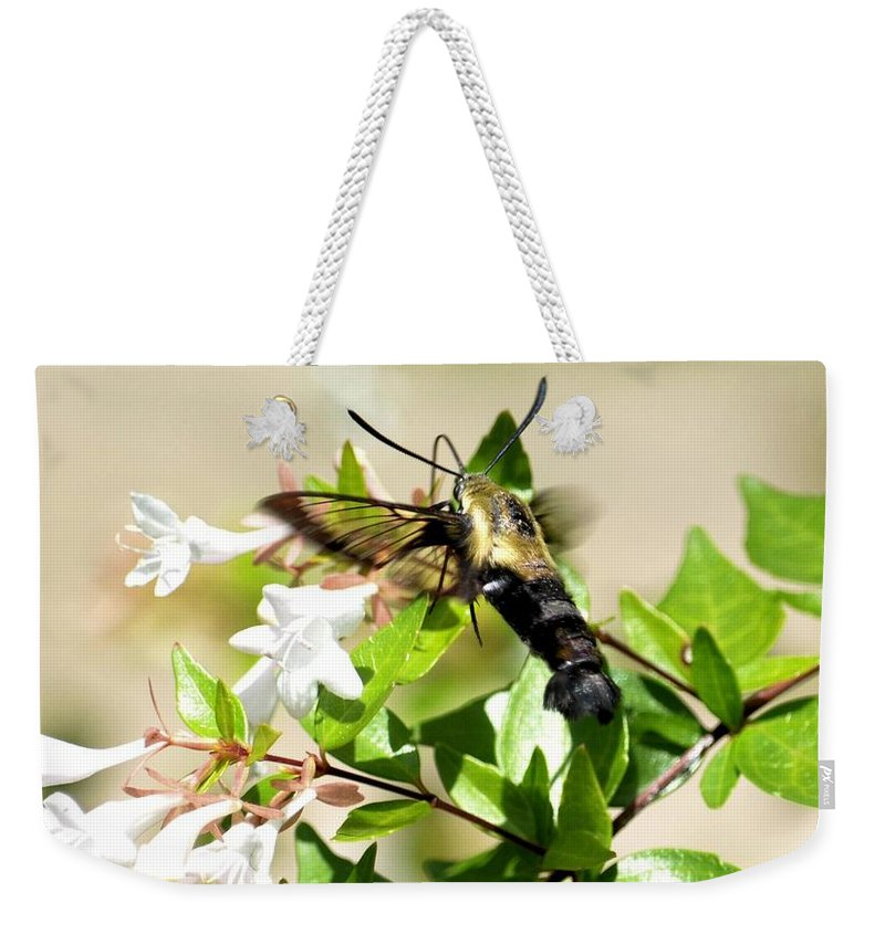 Sphinx Weekender Tote Bag featuring the photograph A Sphinx's Pollination by Maria Urso