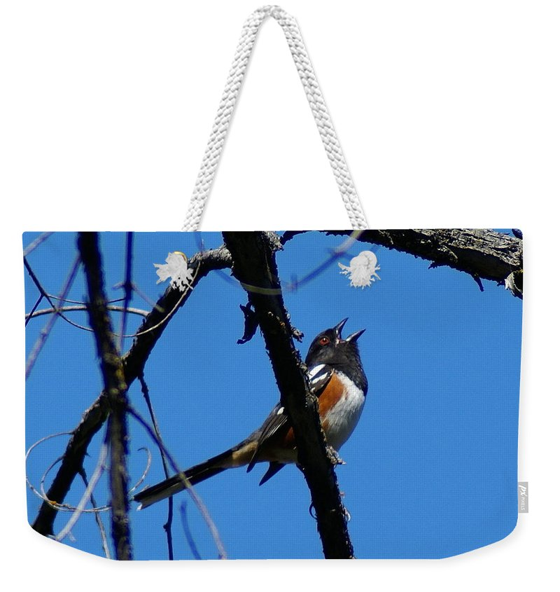 Birds Weekender Tote Bag featuring the photograph A Spotted Towhee Mid-song by Ben Upham III