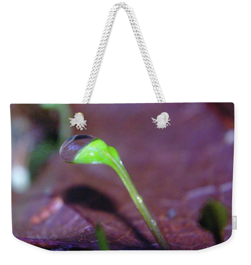 Sprouts Weekender Tote Bag featuring the photograph A Sprout Lifting A Waterdrop by Jeff Swan