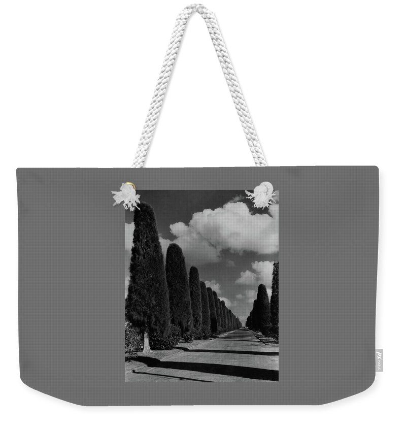 Cityscape Weekender Tote Bag featuring the photograph A Street Lined With Cypress Trees by John Kabel