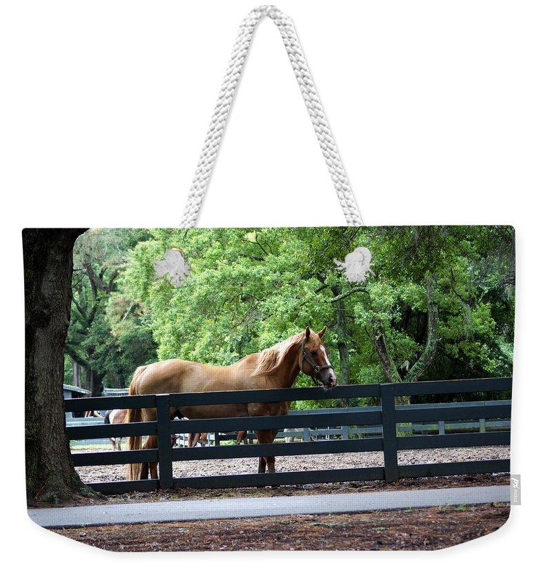 Hilton Head Island Horses Weekender Tote Bag featuring the photograph A Very Beautiful Hilton Head Island Horse by Kim Pate