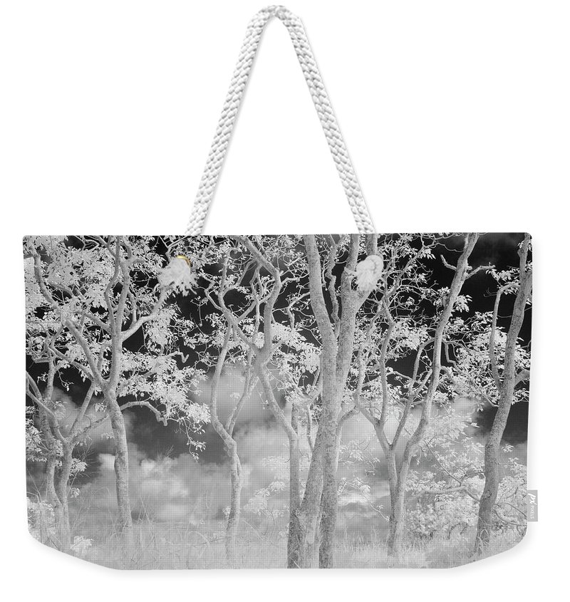 Beauty In Nature Weekender Tote Bag featuring the photograph A View Of Candlenut Aleurites Moluccana by Jonathan Kingston