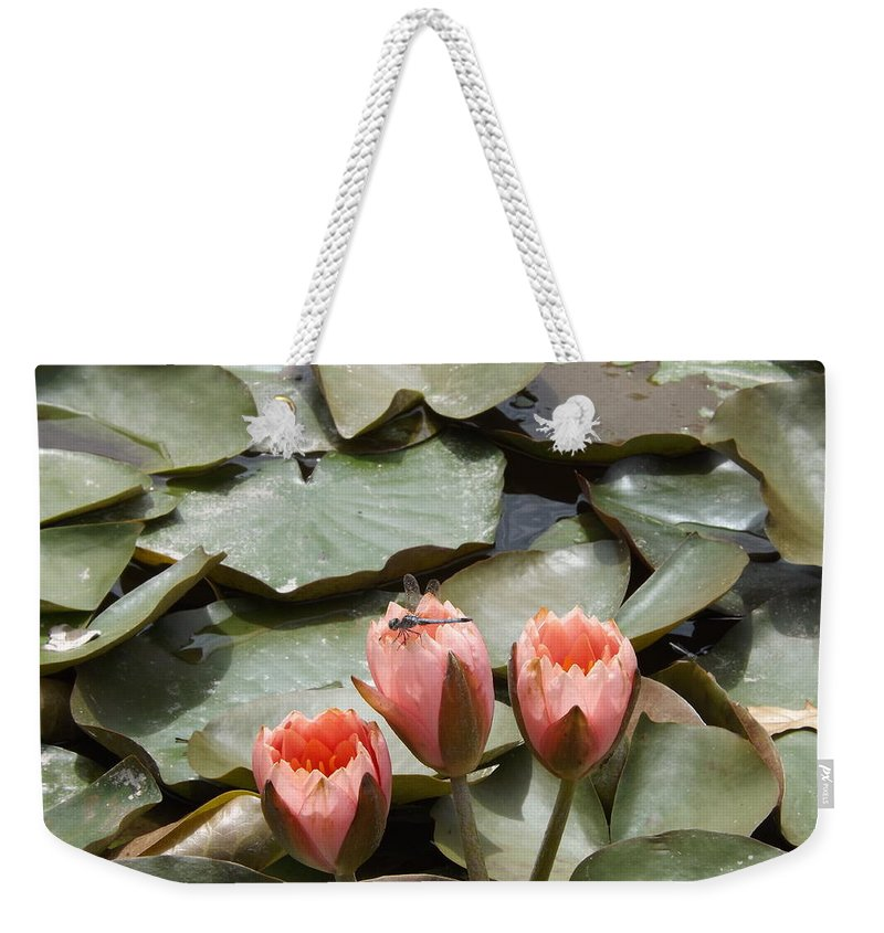 Pink Weekender Tote Bag featuring the photograph A Visitor To The Pond by Caryl J Bohn