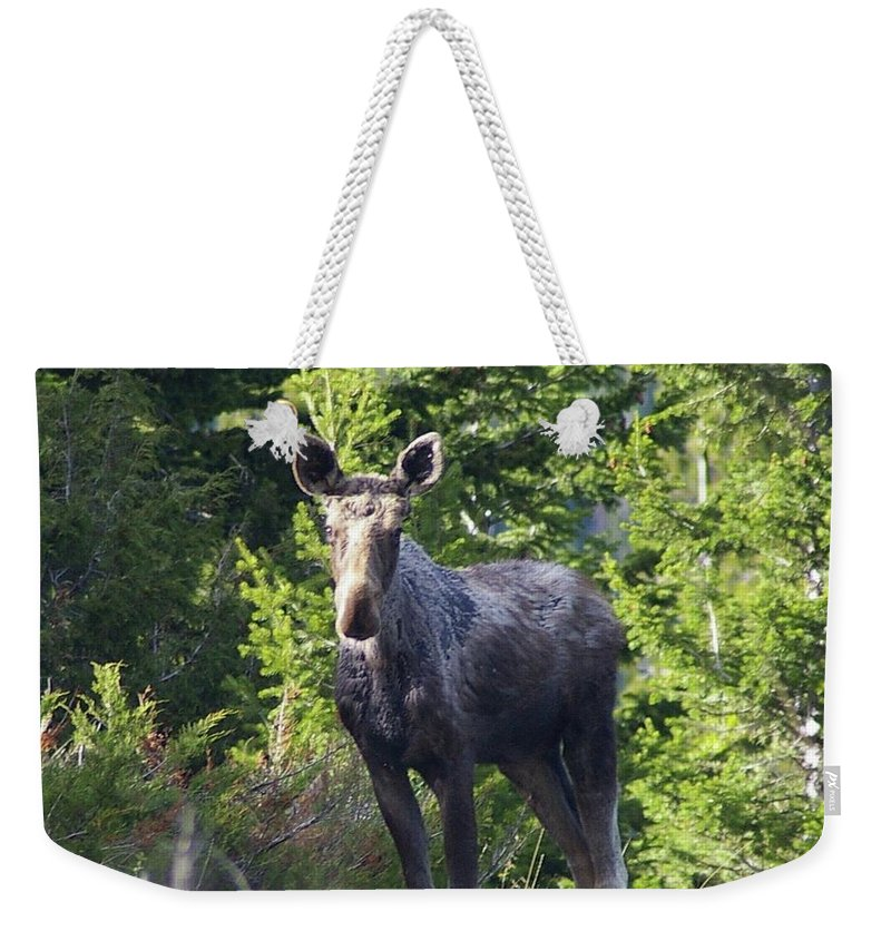 Moose Weekender Tote Bag featuring the photograph A Young Moose by Jeff Swan