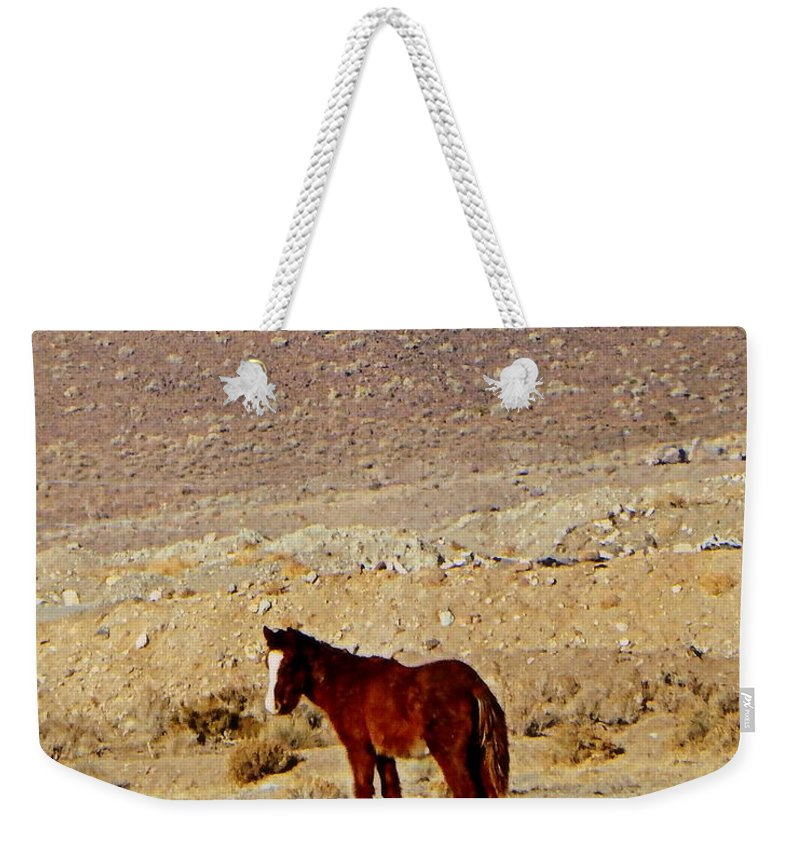 Acrylic Prints Weekender Tote Bag featuring the photograph A Young Mustang by Bobbee Rickard