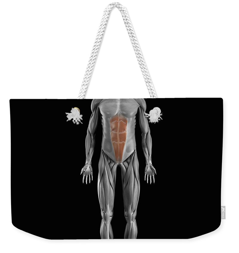 Full View Weekender Tote Bag featuring the photograph Abdominal Muscles by Science Picture Co