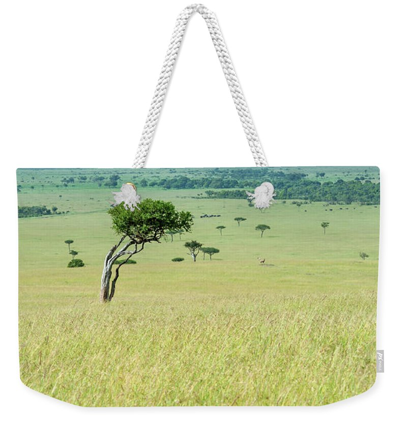 Scenics Weekender Tote Bag featuring the photograph Acacia In The Green Plains Of Masai Mara by Guenterguni
