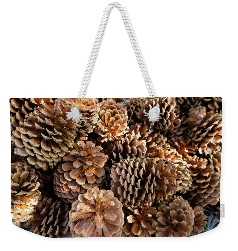 Photography Weekender Tote Bag featuring the photograph Acorns Growing On Plants by Panoramic Images