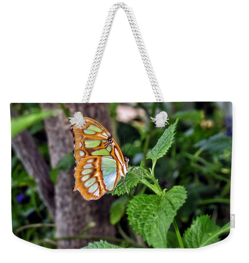 Butterfly Weekender Tote Bag featuring the photograph Admiring The Garden by Thomas Woolworth