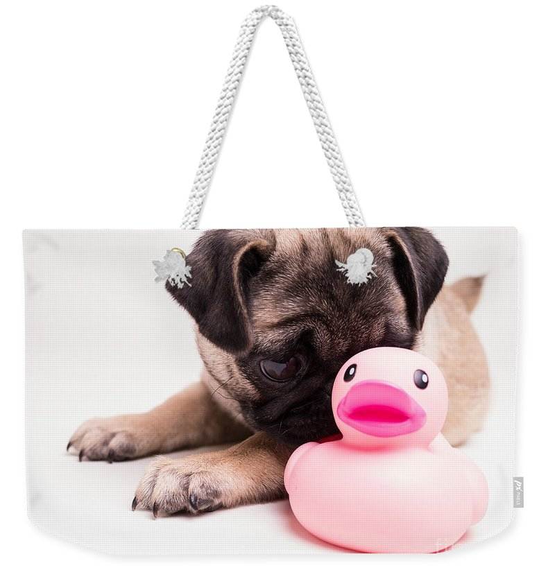Pug Weekender Tote Bag featuring the photograph Adorable Pug Puppy With Pink Rubber Ducky by Edward Fielding