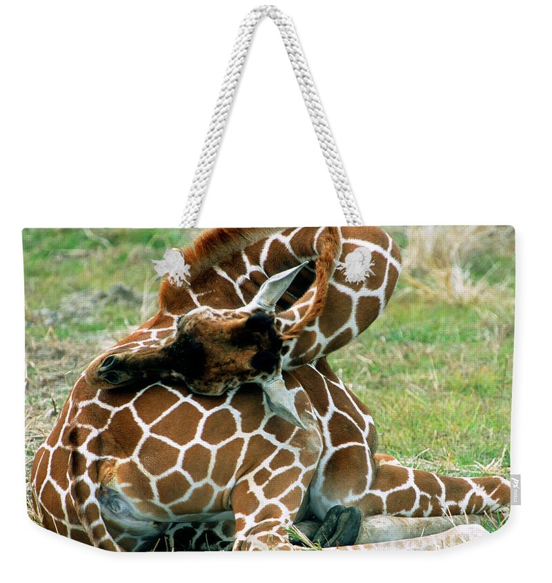 Nature Weekender Tote Bag featuring the photograph Adult Reticulated Giraffe by Millard H. Sharp