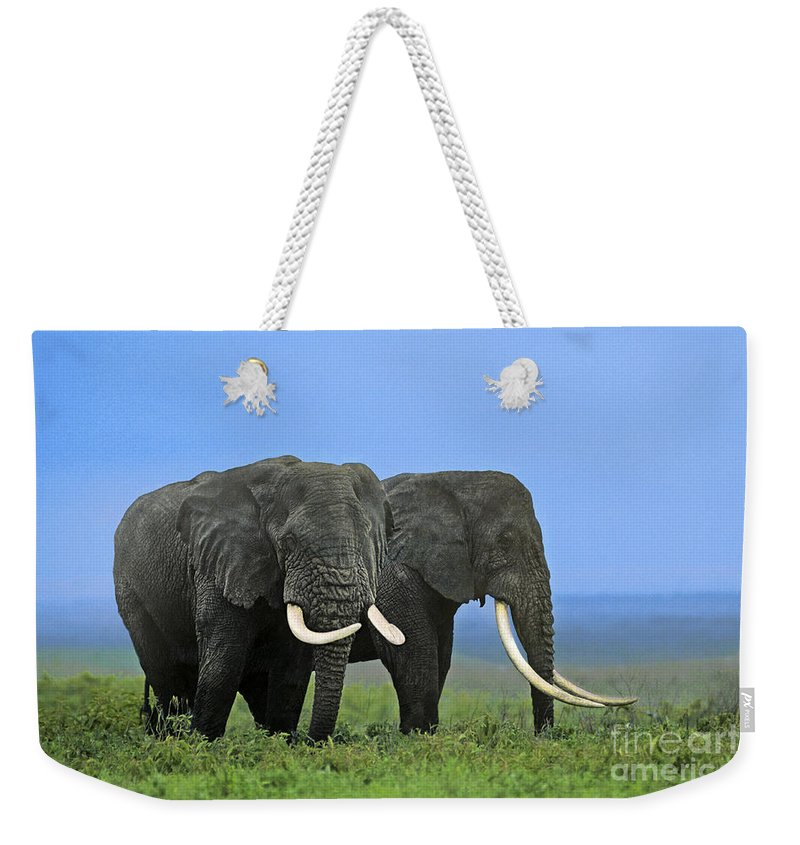 Africa Weekender Tote Bag featuring the photograph African Bull Elephants In Rain Endangered Species Tanzania by Dave Welling