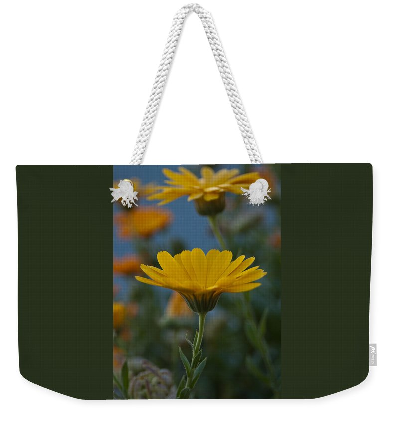 African Daisy Weekender Tote Bag featuring the photograph African Daisies by Jill Mitchell