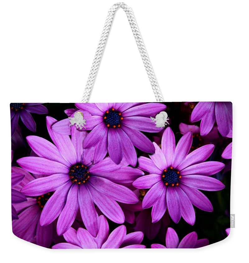 African Daisy Weekender Tote Bag featuring the photograph African Daisy Photo Digital Art by David Dehner