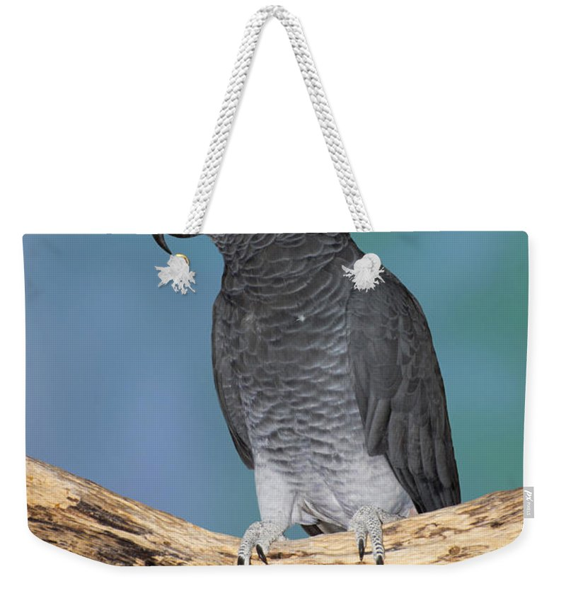 Gray Parrot Weekender Tote Bag featuring the photograph African Gray Parrot by Anthony Mercieca