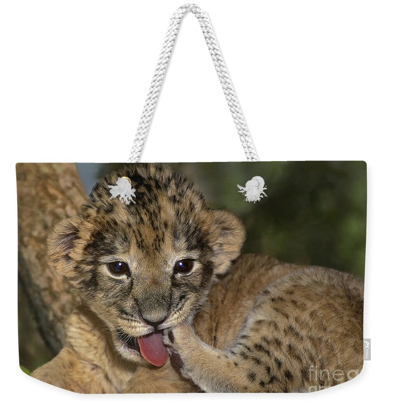African Lion Weekender Tote Bag featuring the photograph African Lion Cub Wildlife Rescue by Dave Welling