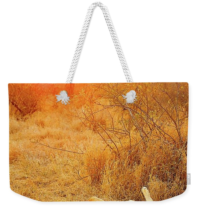 Africa Weekender Tote Bag featuring the photograph African Mammals by Shannon Benson