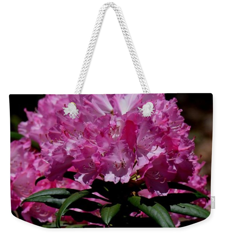 African Pink Weekender Tote Bag featuring the photograph African Pink by Maria Urso